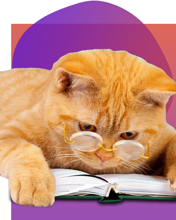 HeyYou-Education-Cat